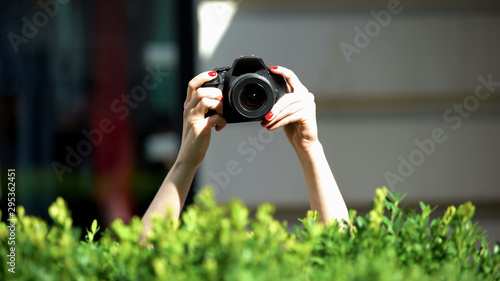 Woman hands holding photo camera behind park bush, private detective, spying Canvas Print