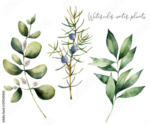 Fototapeta Watercolor juniper and eucalyptus set. Hand painted winter plants with branches and berries isolated on white background. Floral illustration for design, print, fabric or background. obraz