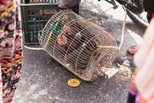 Mercado De Animales En Vietnam