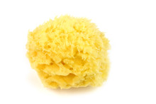Natural Sea Sponge Isolated On...