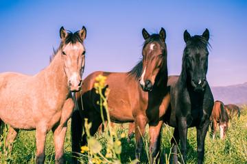 3 caballos hermosos