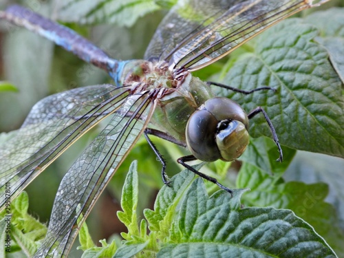 Photo Dragon fly