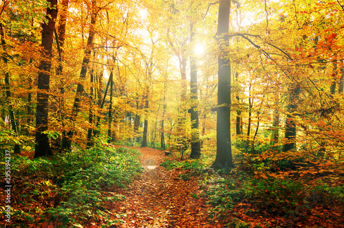 Photo  bunter Herbstwald mit Waldweg im Sonnenlicht