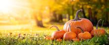 Pumpkins On Grass In Field Wit...