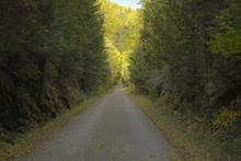 Sentier D'automne éclairé Au Loin