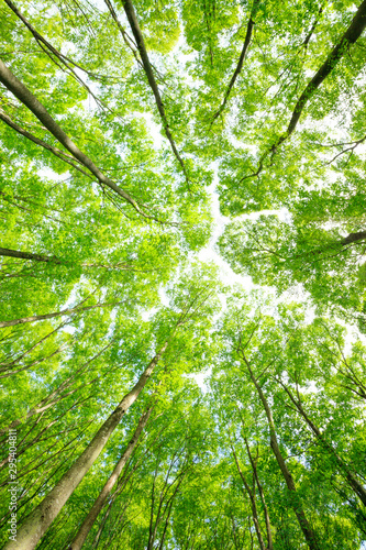 Fotobehang Lente Green forest. Tree with green Leaves and sun light.