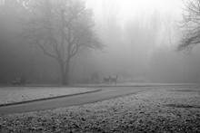 White Tail Deer In The Fog