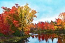 Colorful Fall Foliage At The Edge Of A Lake