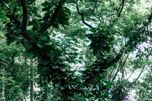 Photo Horizontal shot of green foliage in the daytime