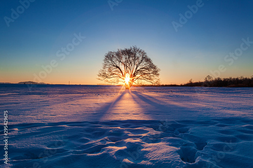 Fényképezés 北海道・冬のハルニレの木の朝日