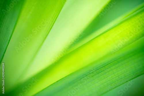 Deurstickers Planten Closeup nature view of green leaf on blurred greenery background in garden with copy space using as background natural green plants landscape, ecology, fresh wallpaper concept.