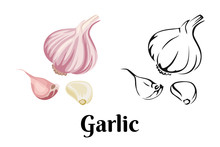 Garlic Isolated On White Backg...