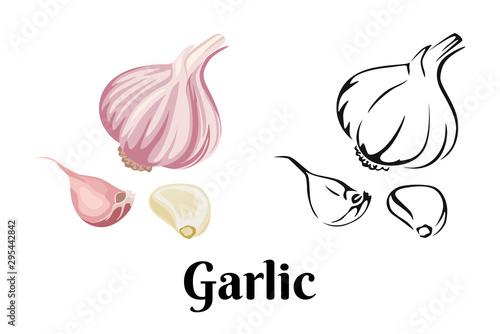 Cuadros en Lienzo Garlic isolated on white background
