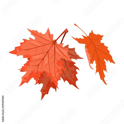 Fototapety, obrazy: Senescent falling red leaves of maple tree or shrub. National symbol of Canada. Beautiful autumn nature. Relaxation, stress releasing in park, forest concept. Vector cartoon isolated on white.