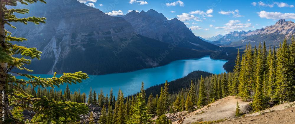 Fototapety, obrazy: Gorgeous Peyto Lake Panorama