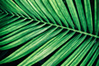 tropical palm leaf, green nature background