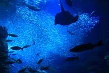 江の島水族館の巨大水...