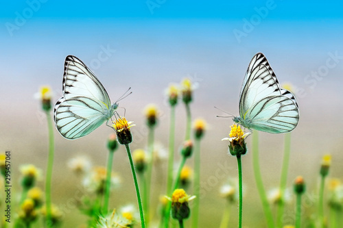 Fototapeta  butterfly on flower