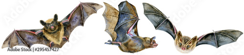 Photo Watercolor illustration of a bats in white background.