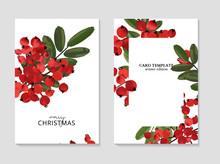 Ash Berry Greeting Merry Christmas Cards, Winter Seasonal Art Drawing Template.