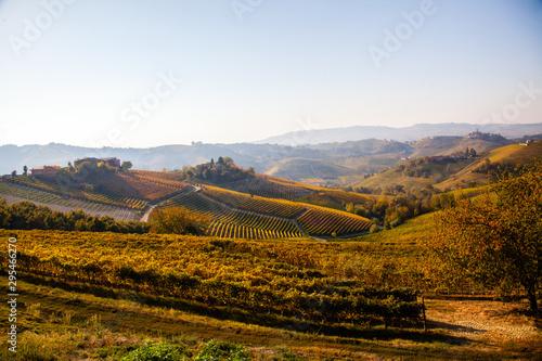 Photo Panorama  dei vigneti delle Langhe, Piemonte, Italia Europa