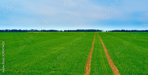 Foto op Plexiglas Groene agricultural landscape of the green field against the background of the blue sky