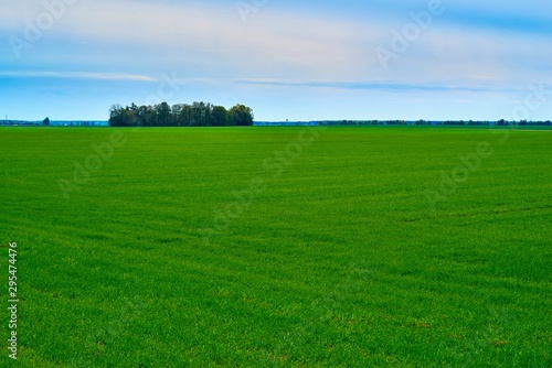 Photo Stands Green agricultural landscape of the hilly field with green shoots of plants against the background of the blue sky