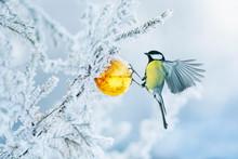 Beautiful Postcard With Bird T...