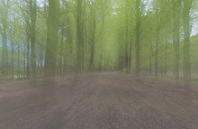 Abstract Beech Woods