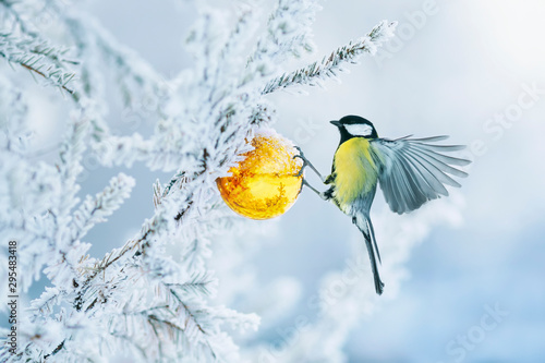 beautiful postcard with bird tit flying have glass Golden festive globe hanging on branch Christmas tree winter in Park