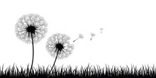 Two Dandelion Silhouette With Flying Seeds On Meadow Vector Illustration EPS10