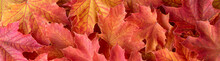Border Of Orange And Yellow Maple Leaves As A Fall Nature Background