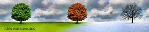 Spoed Foto op Canvas Blauwe hemel Baum im Wechsel der Jahreszeiten