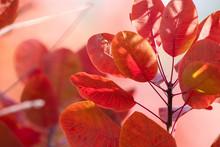 Coloras Of Autumn