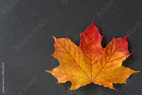 Single orange and yellow maple leaf on a gray slate tile, as a fall nature background