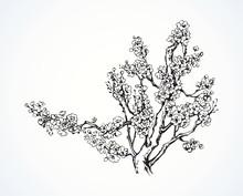 Spring Flowering Tree. Vector ...