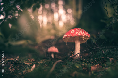 Fototapeta Pilze im Wald während Herbst  obraz
