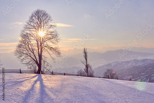Poster de jardin Taupe winter landscape sunrise in the snowy mountains and a tree on a slope