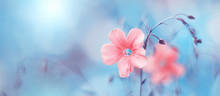 Border Of Delicate Pink Flax F...