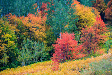 Panel SzklanyVibrant fall colors in the Wasatch Mountains, Utah, USA.