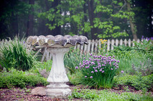Birdbath And Flowers In The Ga...