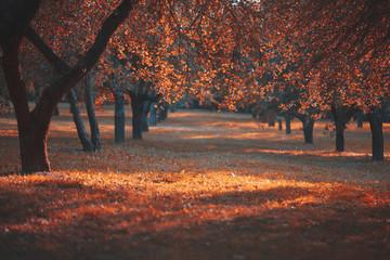 The landskape in autumn