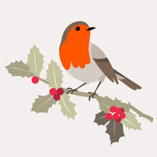 Christmas Bird. Robin Bird Sitting On A Branch Of Holly With Berries. Vector Illustration