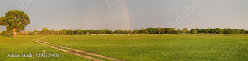 Fotografija  Panorama of typical landscape in the Pantanal Wetlands with a rainbow at the hor