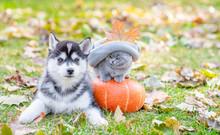 Funny Kitten In A Warm Hat Sitting Near A Husky Puppy On A Pumpkin In Autumn Park.