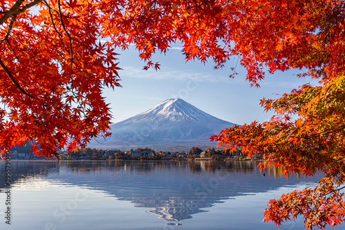 Photo sur Toile Rouge mauve Fuji Mountain in autumn with colorful maple leaves at Lake Kawaguchi, Yamanashi, Japan. Mount Fuji, Fujisan located on Honshu Island, is the highest mountain in Japan.