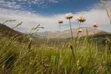 Low Angle Shot Of A Field Of Grass With White Flowers And High Mountains In Italy
