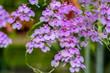 Thailand, Orchid, Flower, Purple, Nature