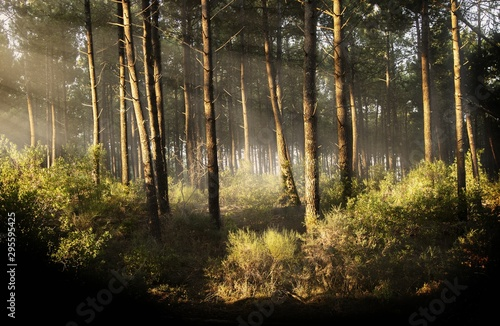 Beautiful horizontal shot of a tree forest with the rays of the sun during daytime