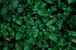 Green leave background